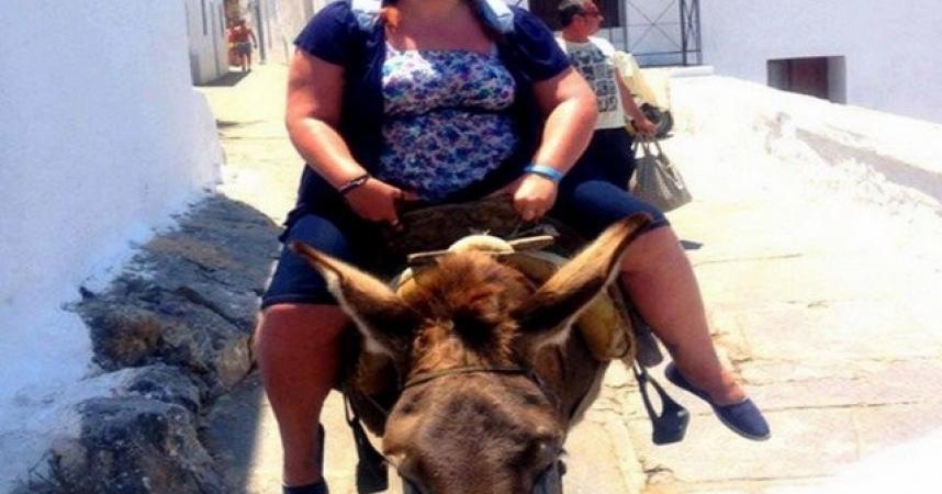 Why do Santorini's tourist donkeys get sick of it ?